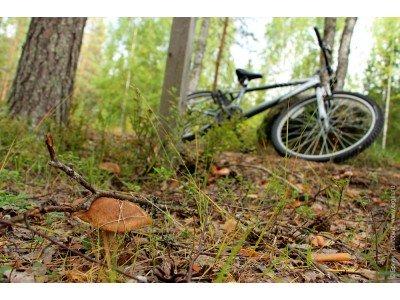 На велосипеді за грибами в ліс
